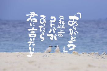 Okadatake002web